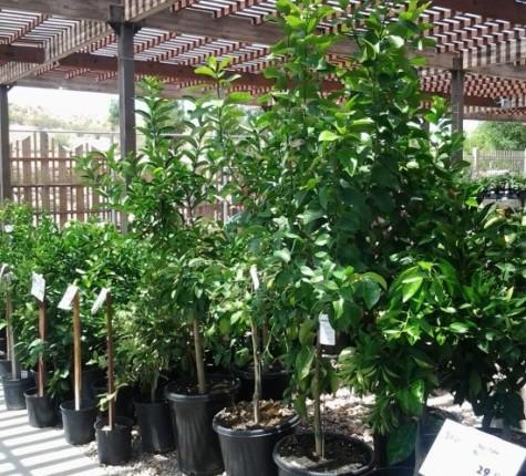 The Diverse Plants of St. George, Utah